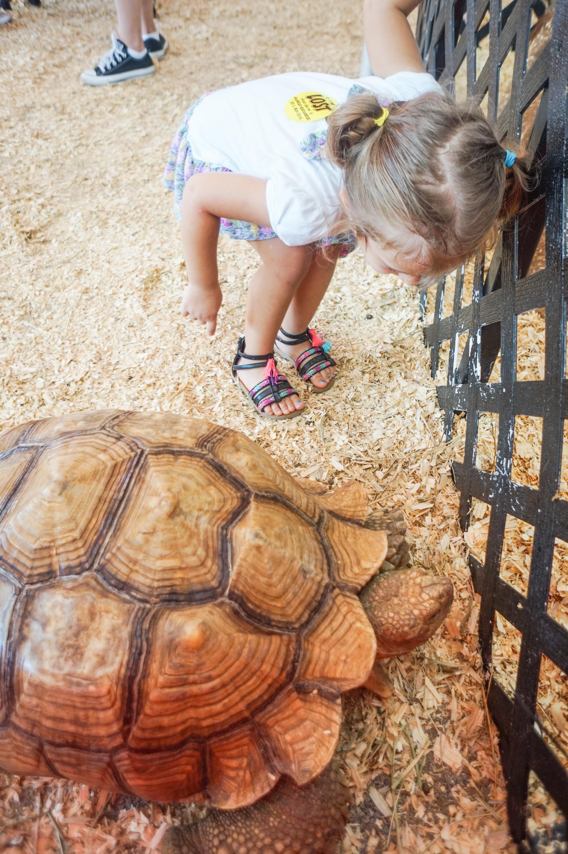 petting-zoo-19.jpg