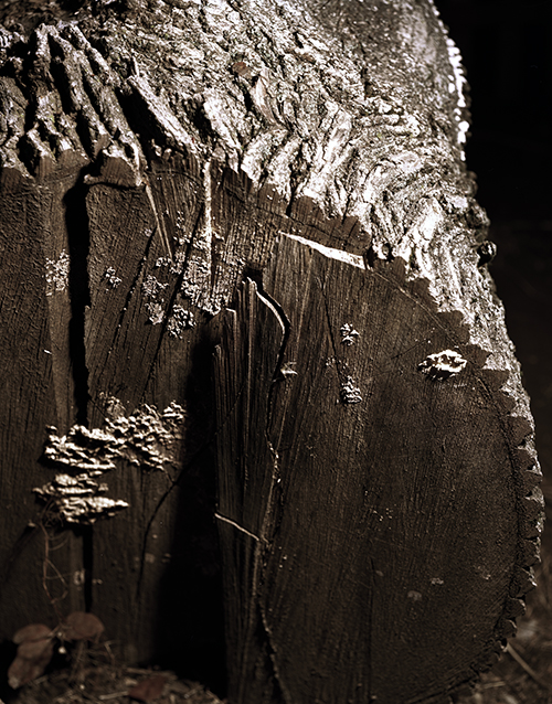 tree 009.jpg