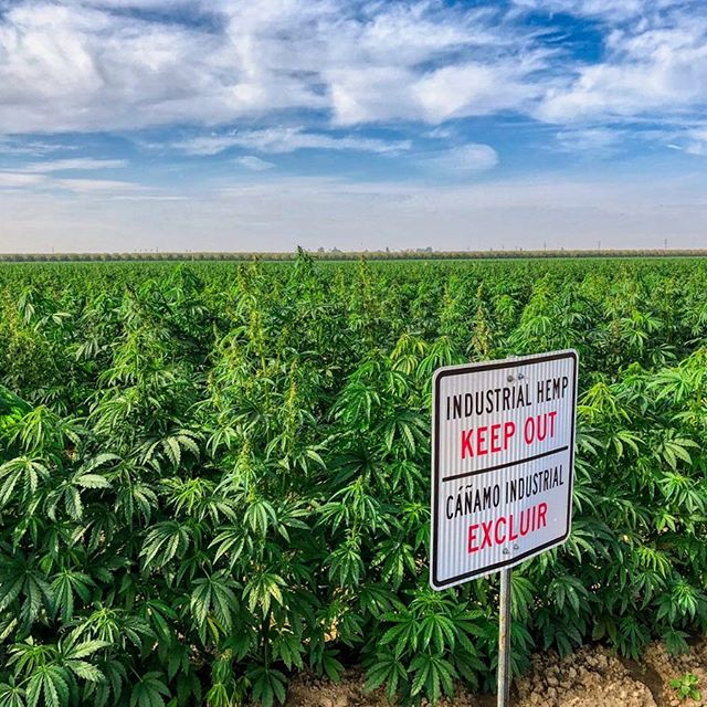 Industrial Hemp. Keep Out. 😬 — #hemp #industrialhemp #cannabis #farm #organic #cbd #cbdoil