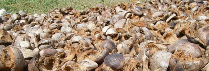 Biomasse in Ceará, Brasilien