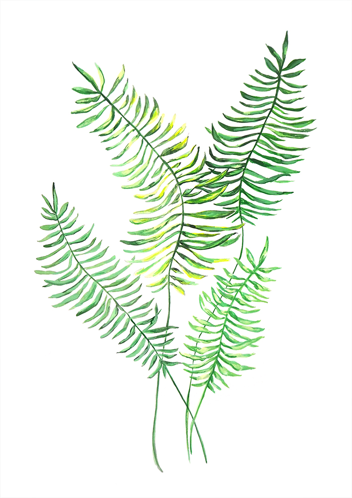 Ferns 1 website size.jpg