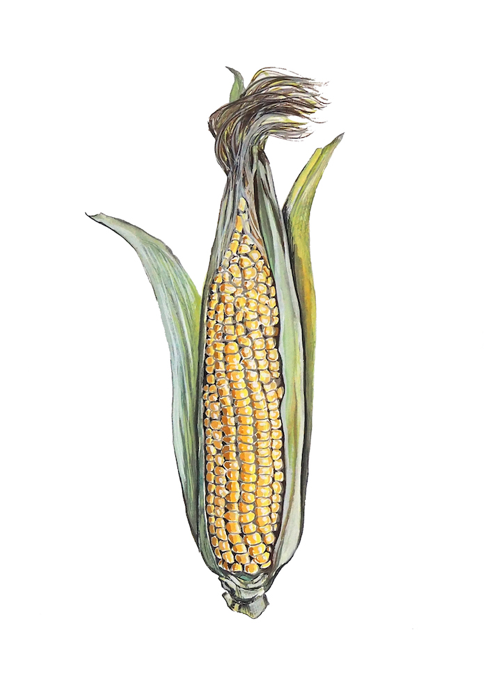 Sweetcorn  1000.jpeg