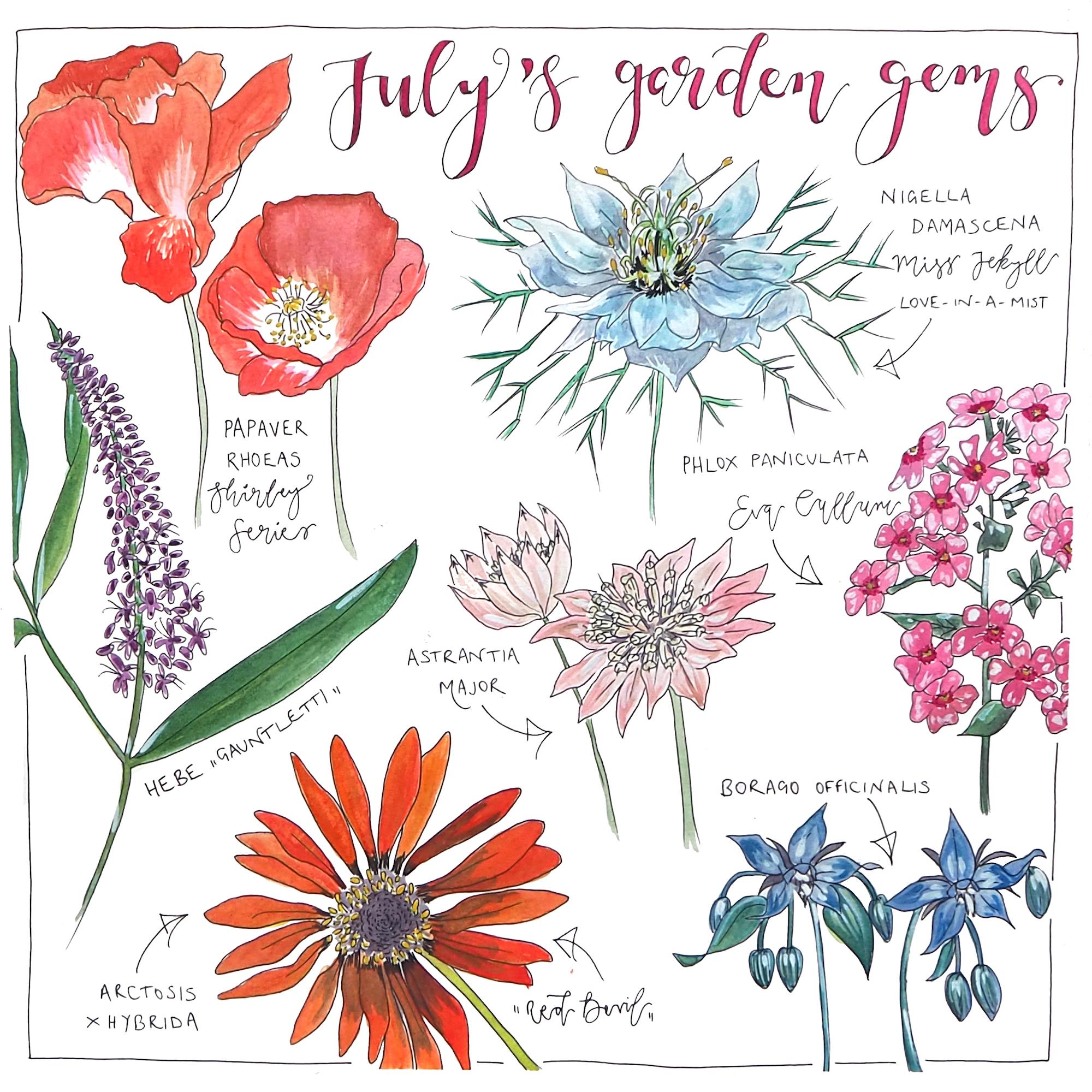 July's garden gems.jpg