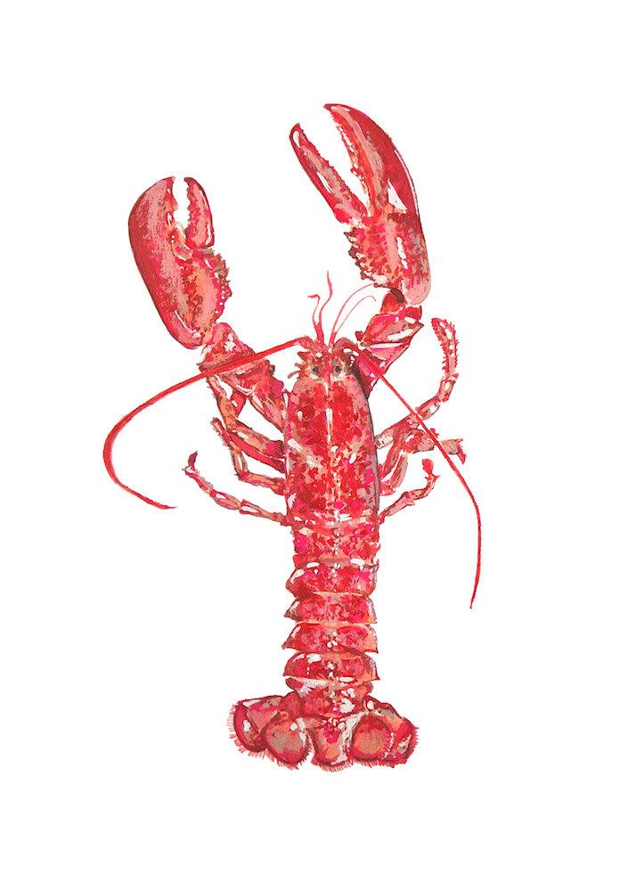 Lobster 1000.jpeg