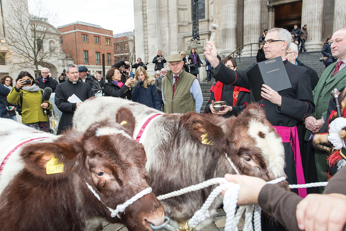 The Beef Shorthorn 'blessing' by St Paul's Precentor, Revd Canon Michael Hampel