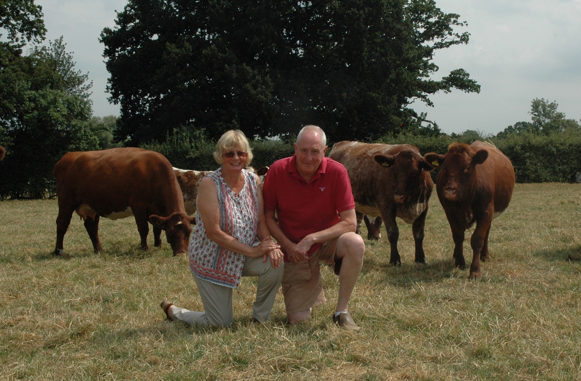 Ian and Nickie Hollows with a portion of their Holkin herd