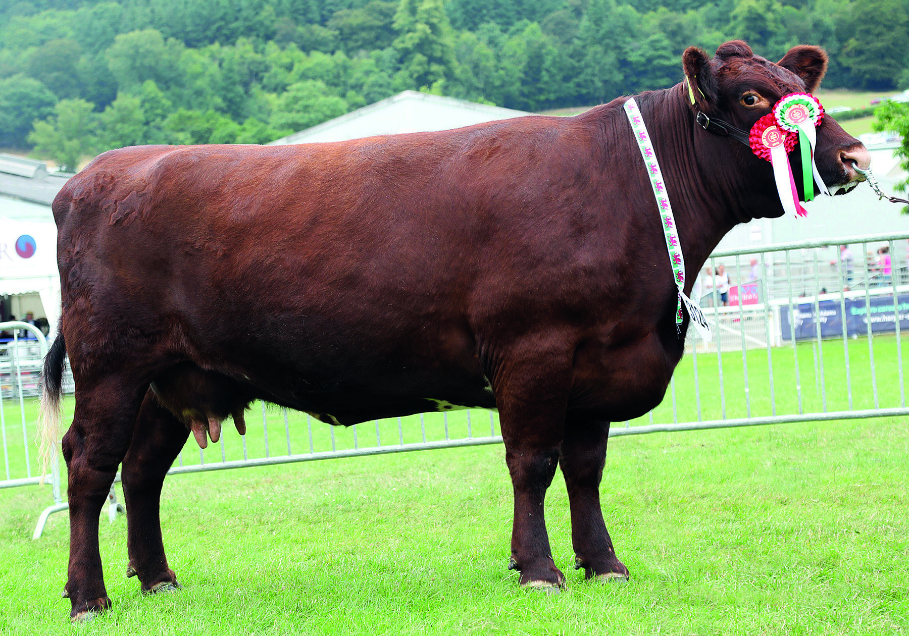 The Royal Welsh Show 2018
