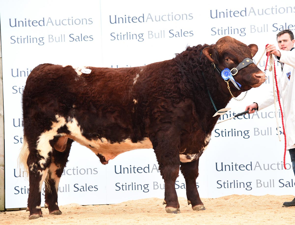 Stirling Bull Sale - February