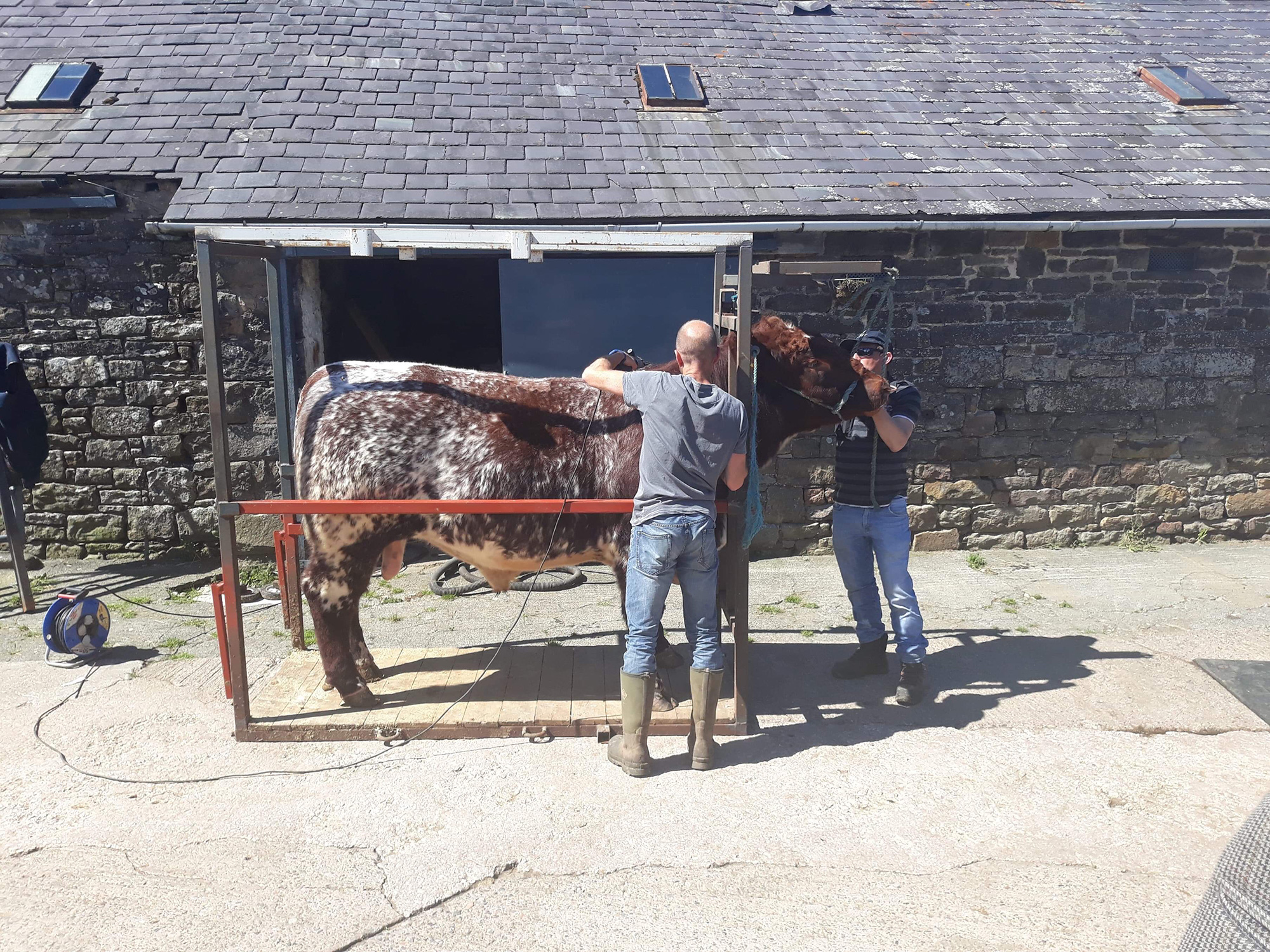 Charles Lowther demonstrating show prep clipping