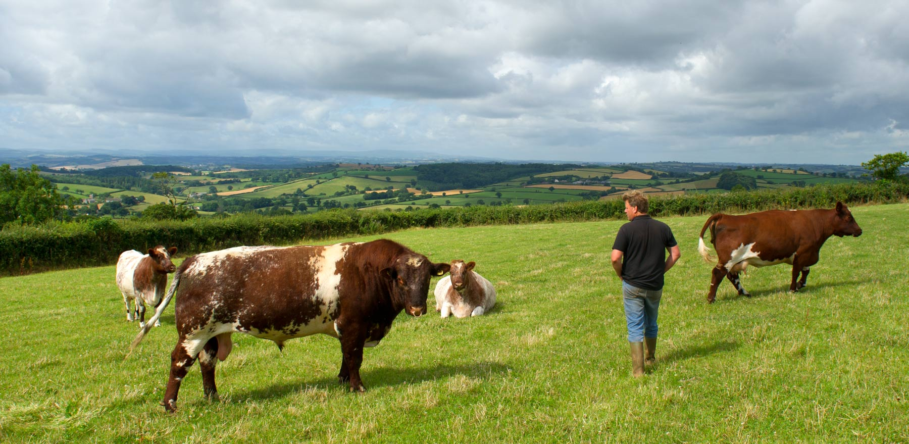 Anthony Thorne inspects some of his Stockleigh herd