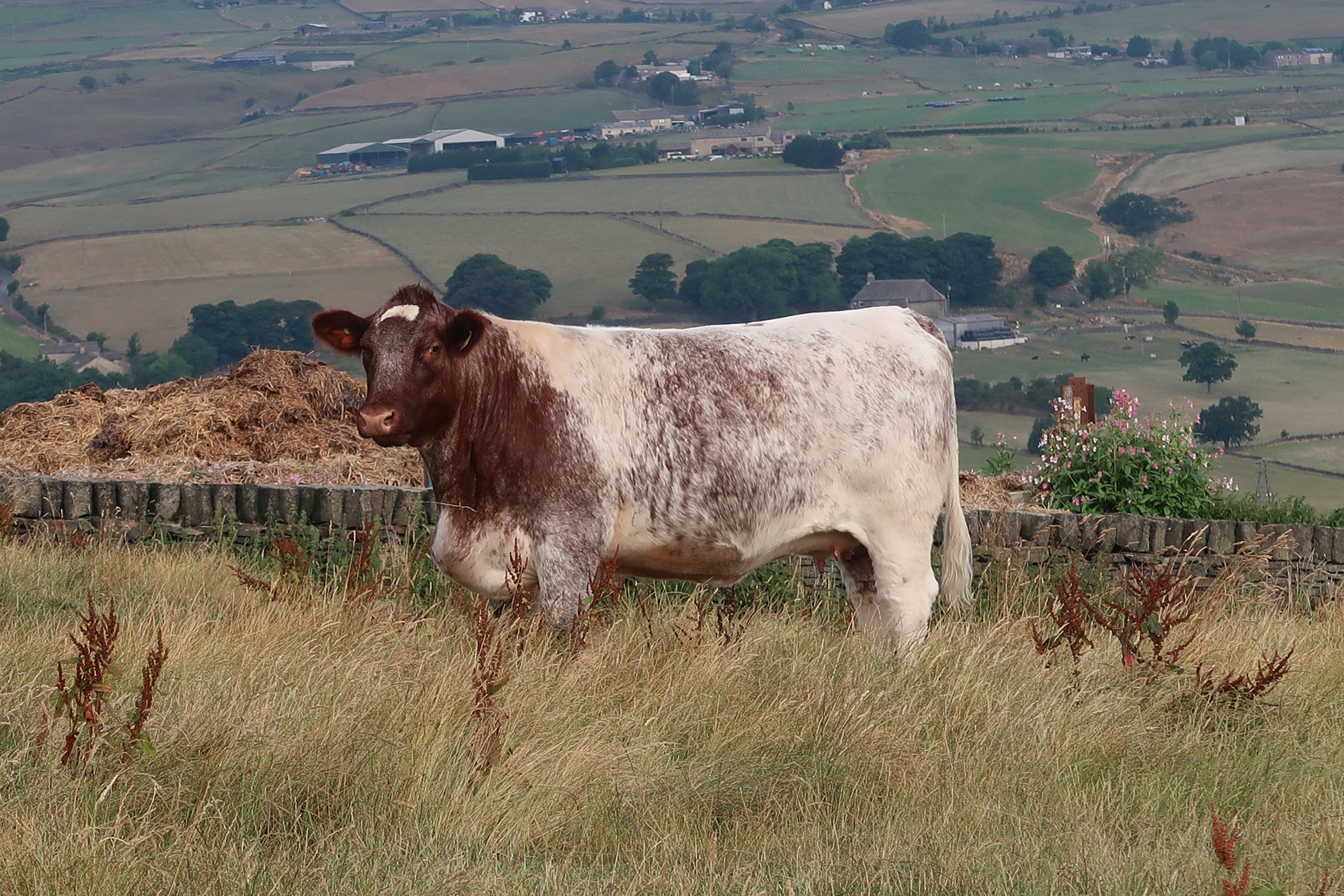 Northern Club Herd Competition 2018