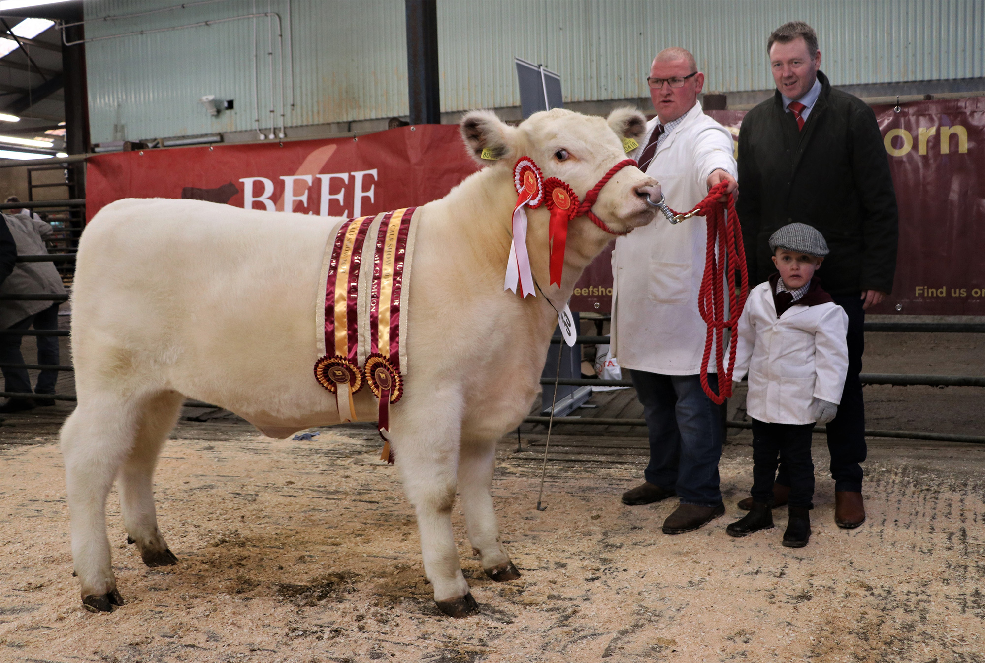 Northern Ireland Club Calf Show 2018