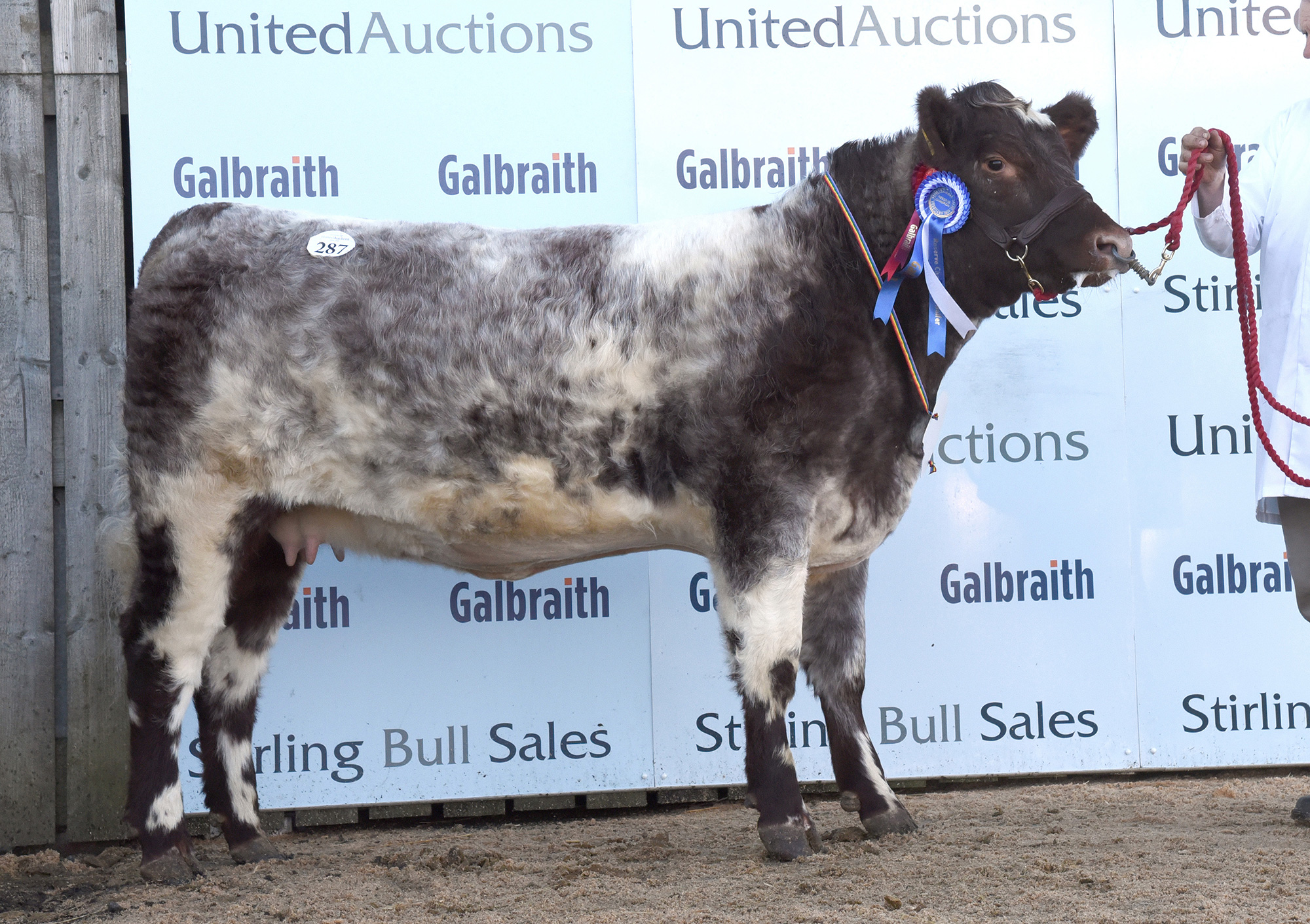 Stirling Bull Sales - February
