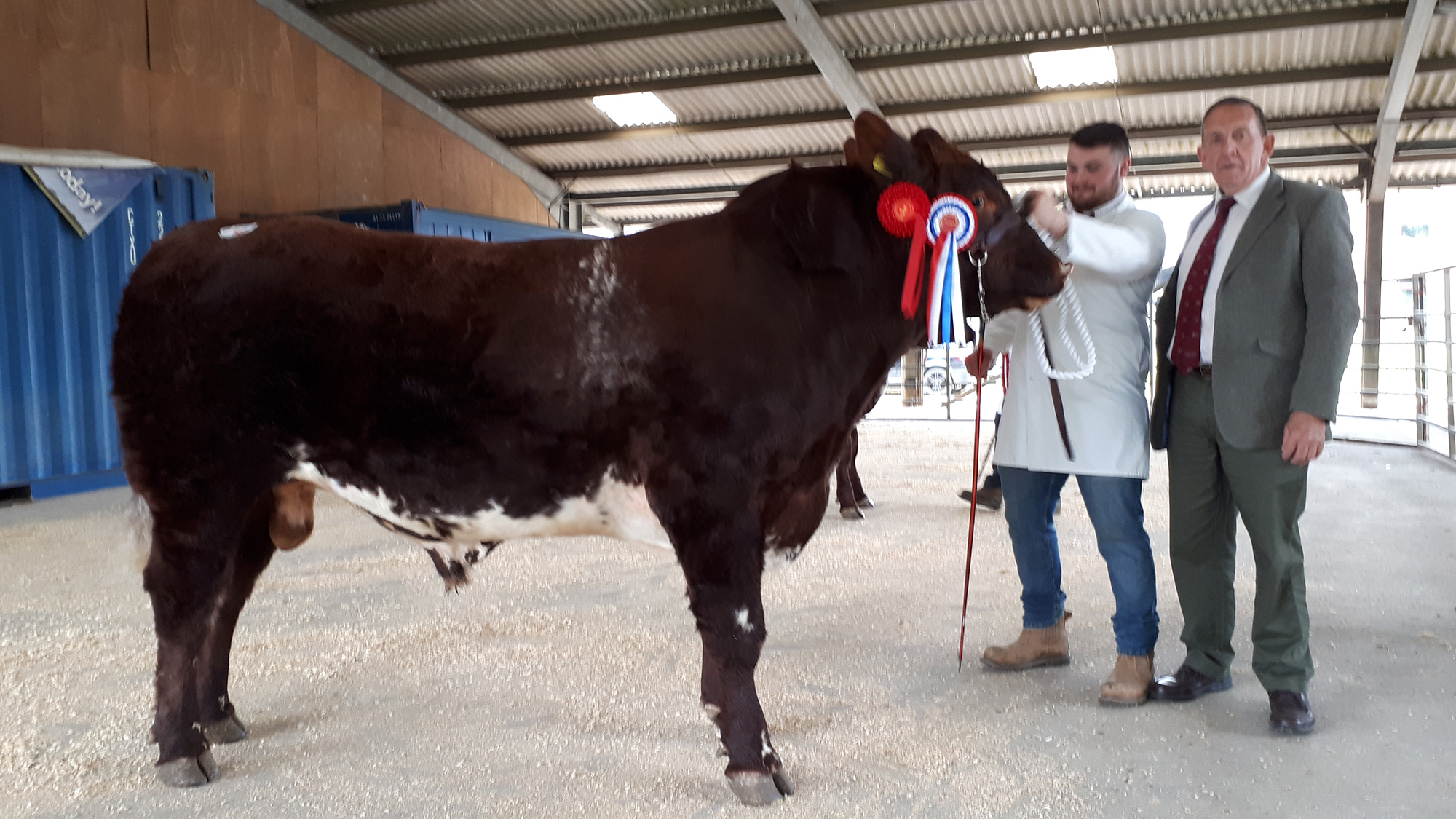 Champion and overall champion, Stanford Park Lone Star, 2,950gns
