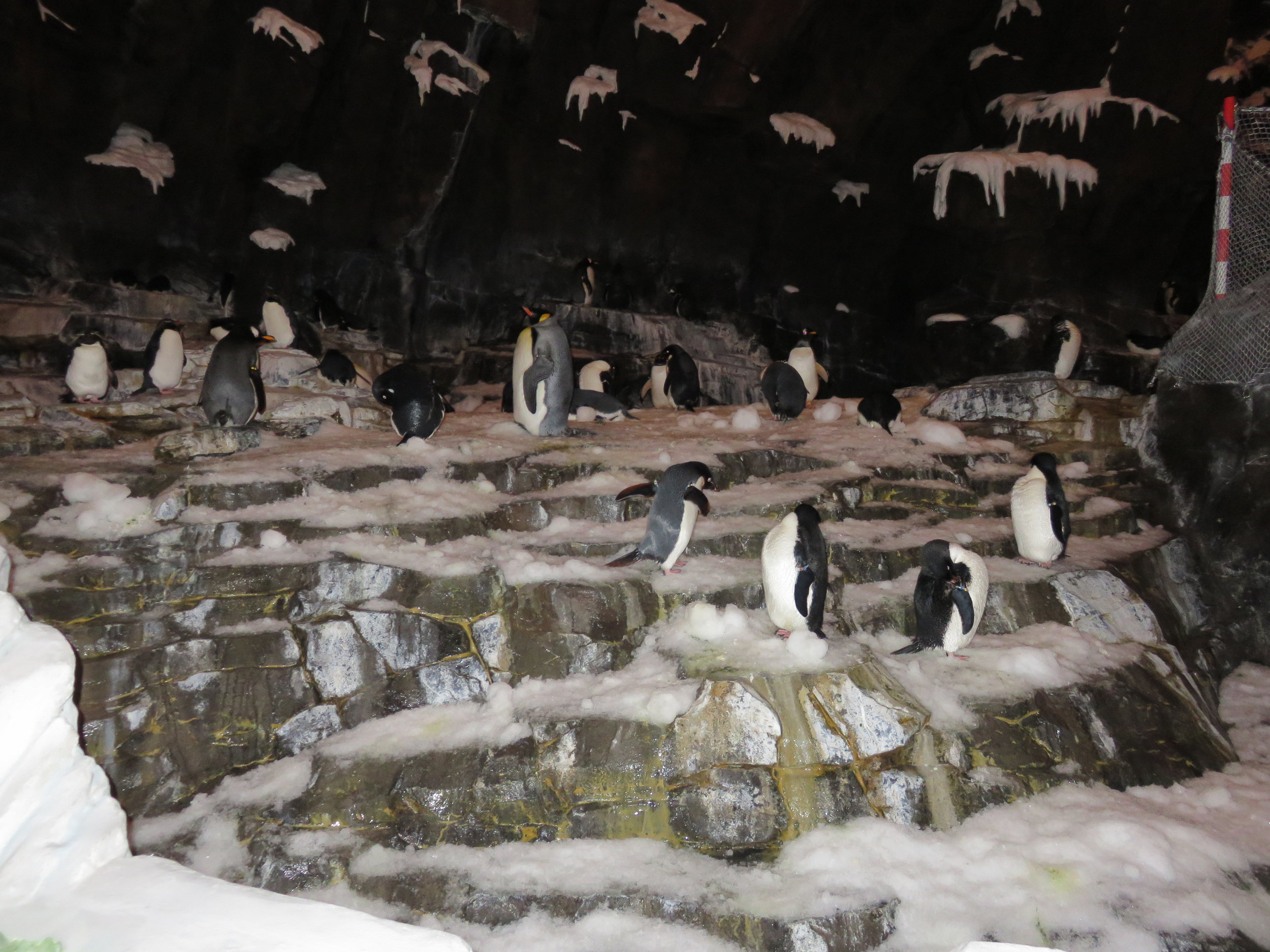 0 - SW - Penguins #1.JPG