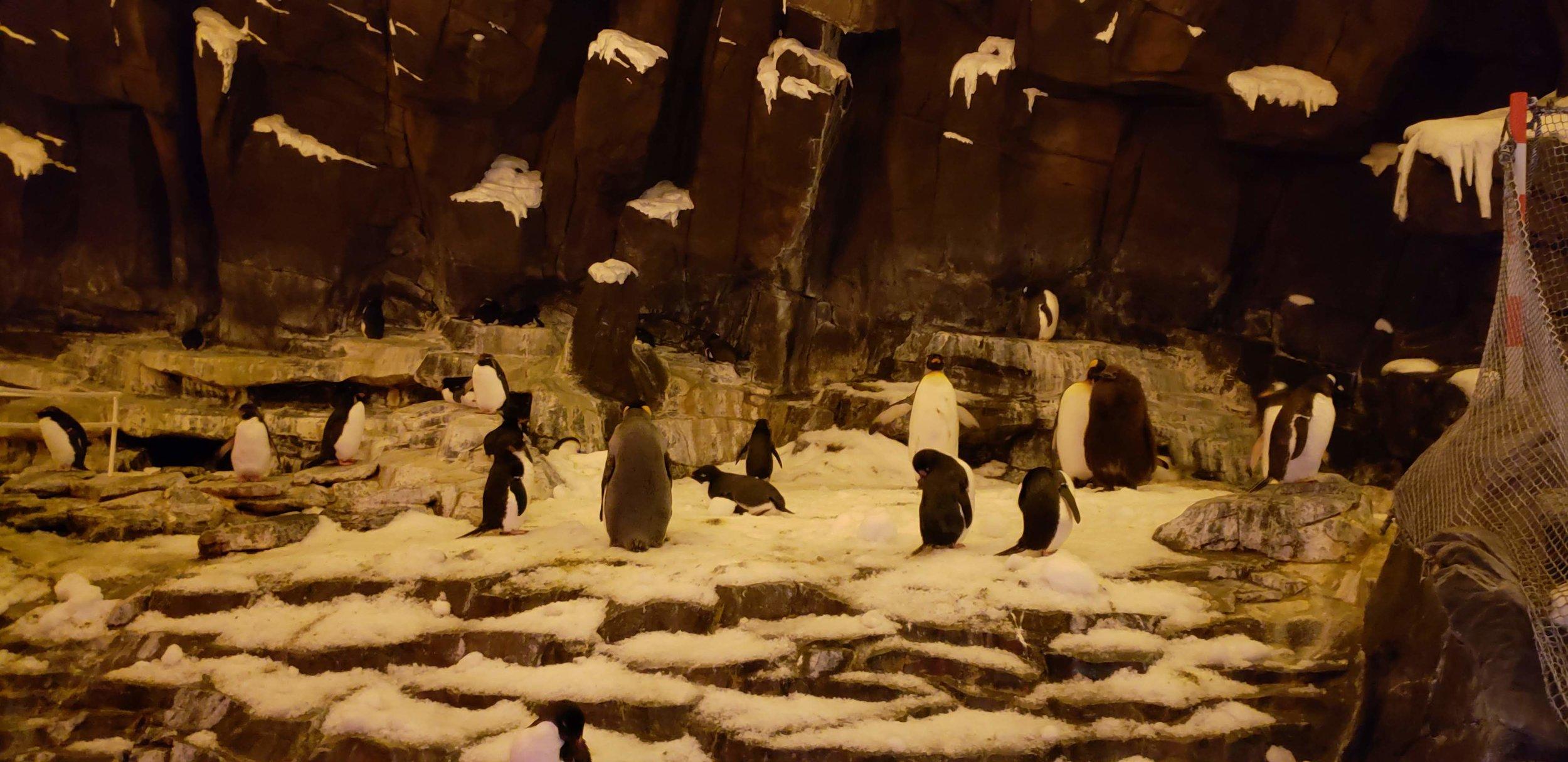 0 - SW - penguins.jpg