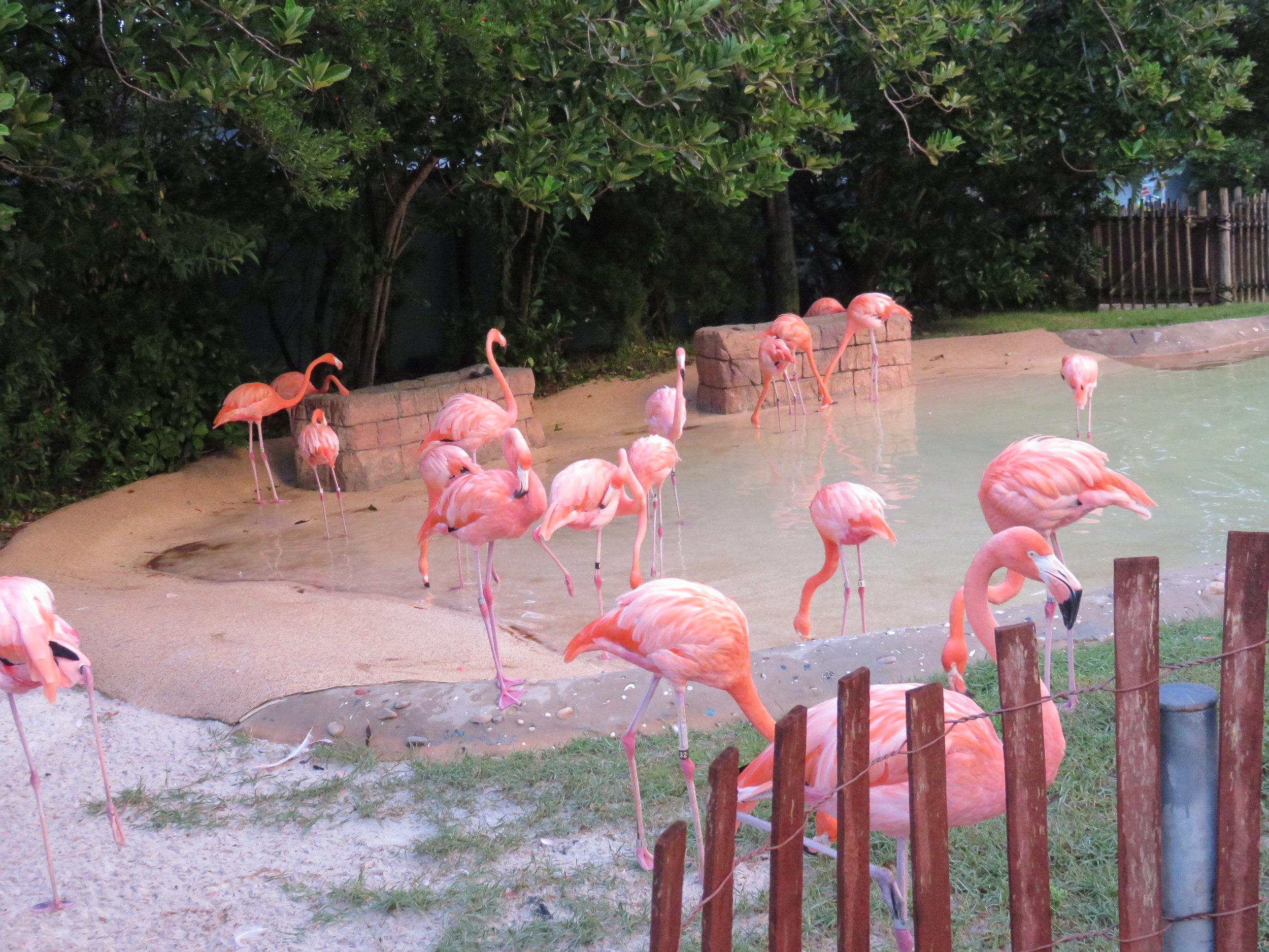 0 - SW - Flamingos - daytime.JPG