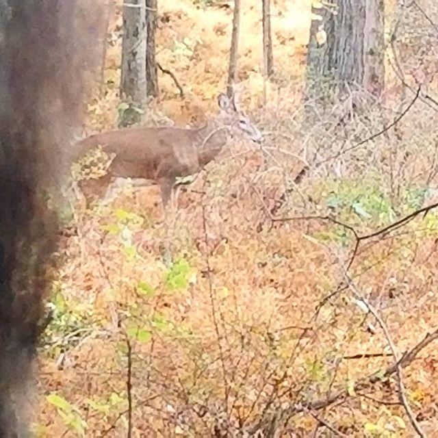20 steps from a young 8 pointer today. Cool.opener. hopefully his big brother will stop by.