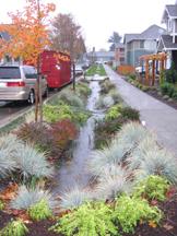 Washington Rain Garden.jpg