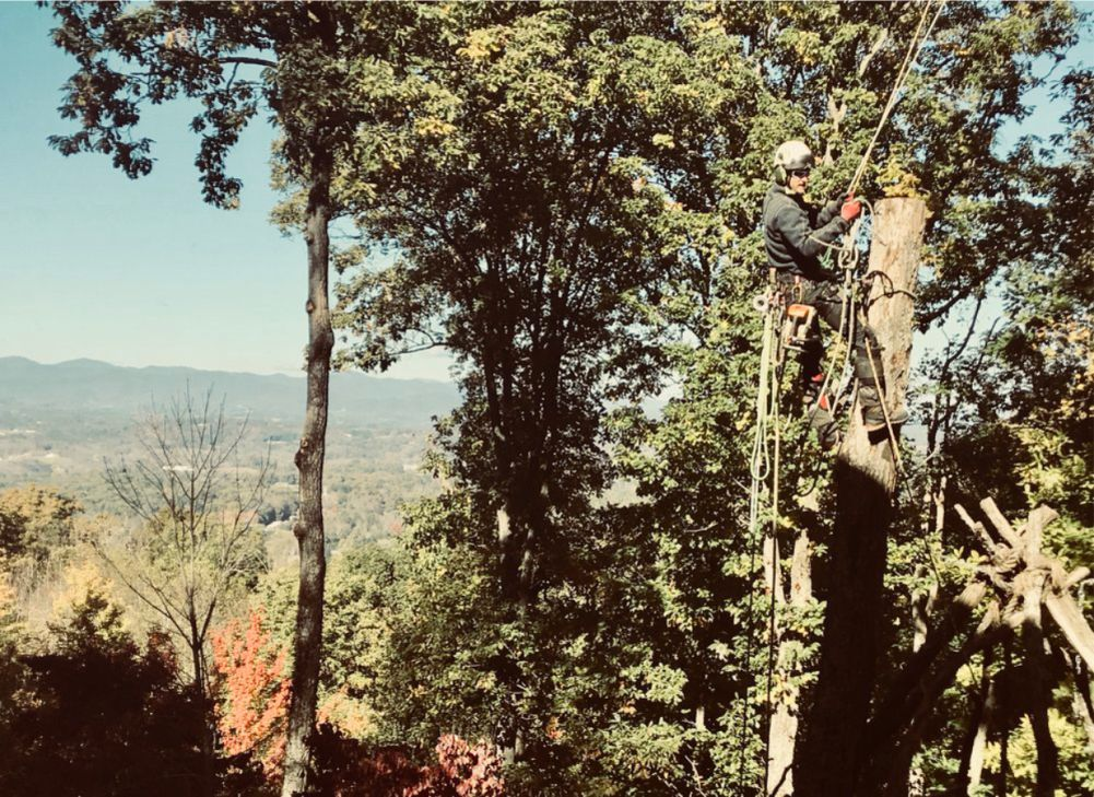 Grizzlybear Arborcare Asheville North Carolina Arborist Tree Services