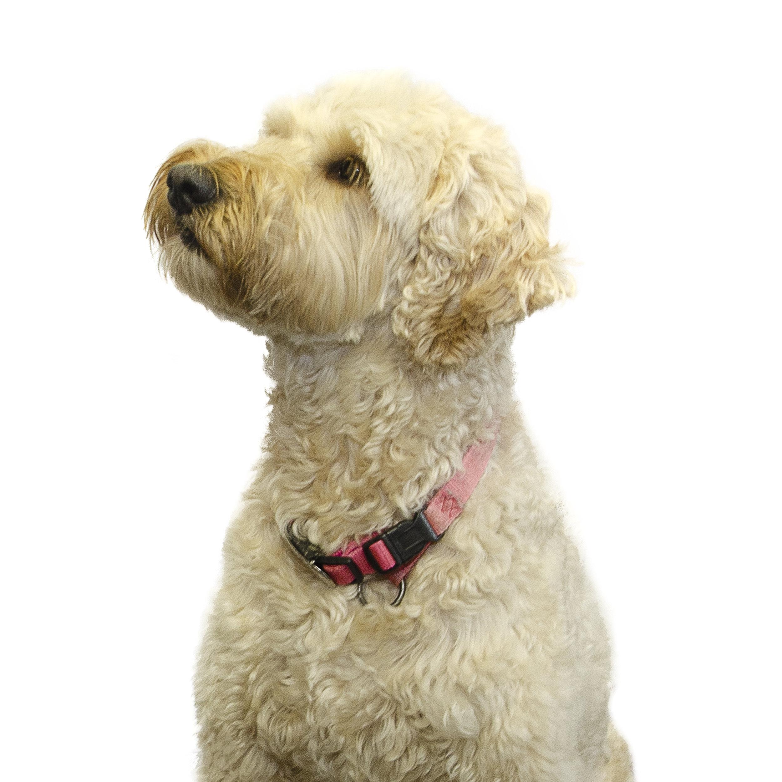 Nola • Waverly Mascot<br>ABA / Behavior Therapy
