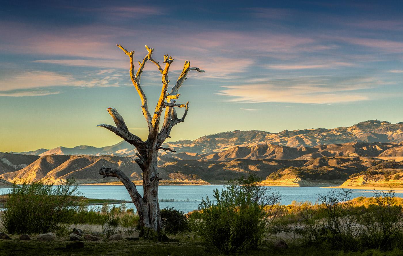 The_Tree_At_Lake_Cachuma%%Ope%%Ken_Pfeiffer.jpg