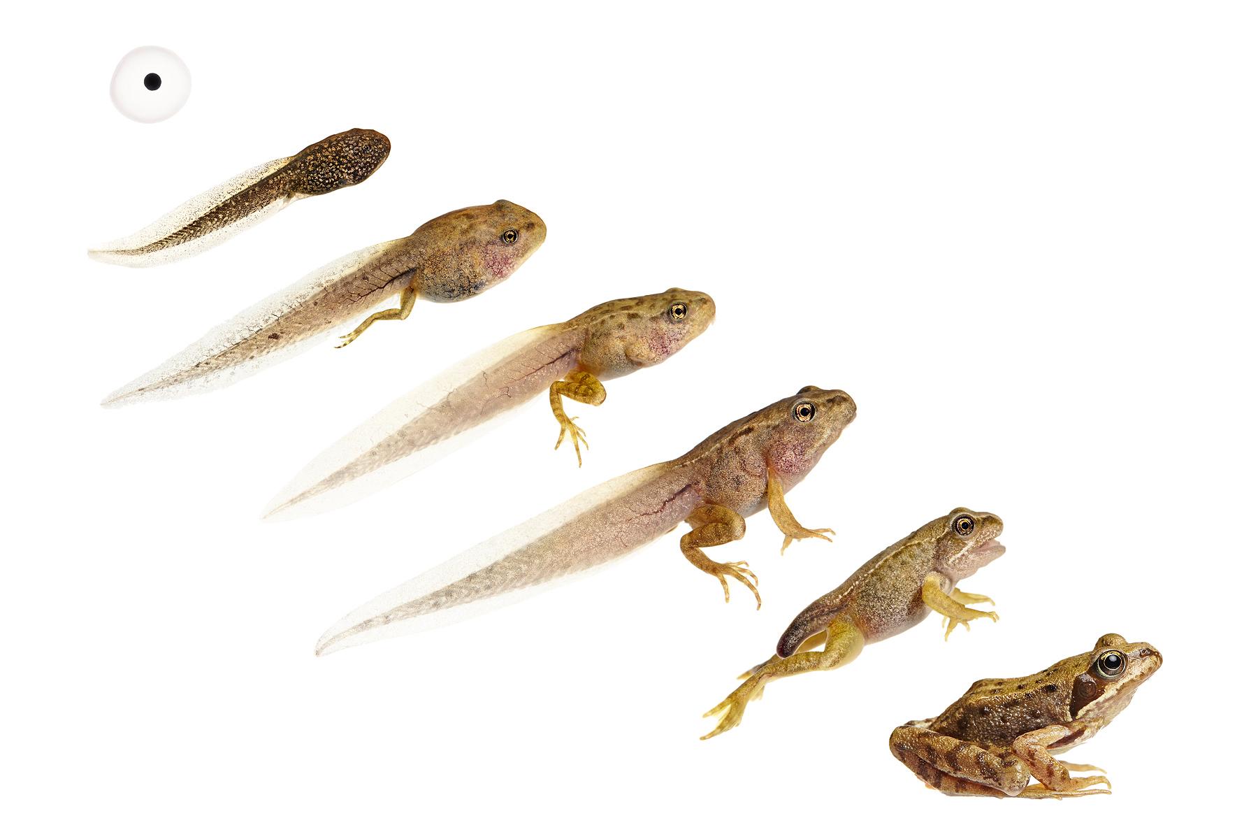 0001_Frog Life Cycle-1.jpg