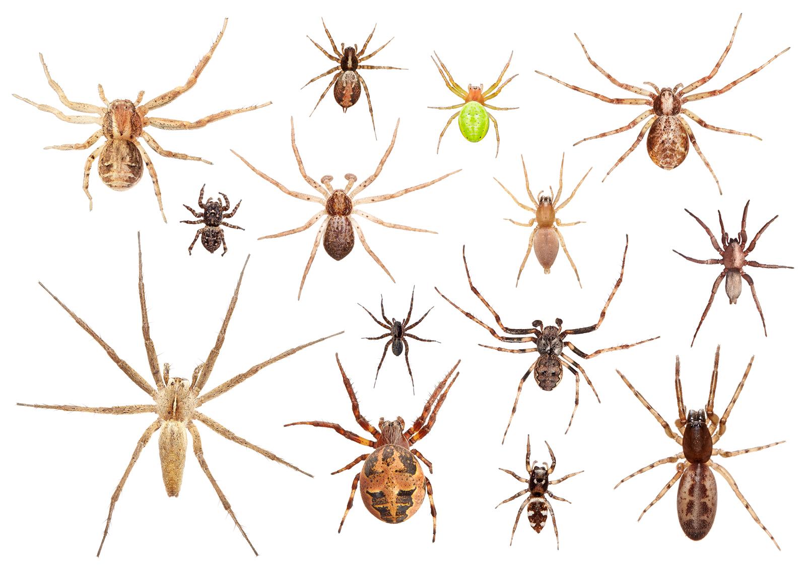 0014_web_Spiders-in-Garden-MYN--copy.jpg