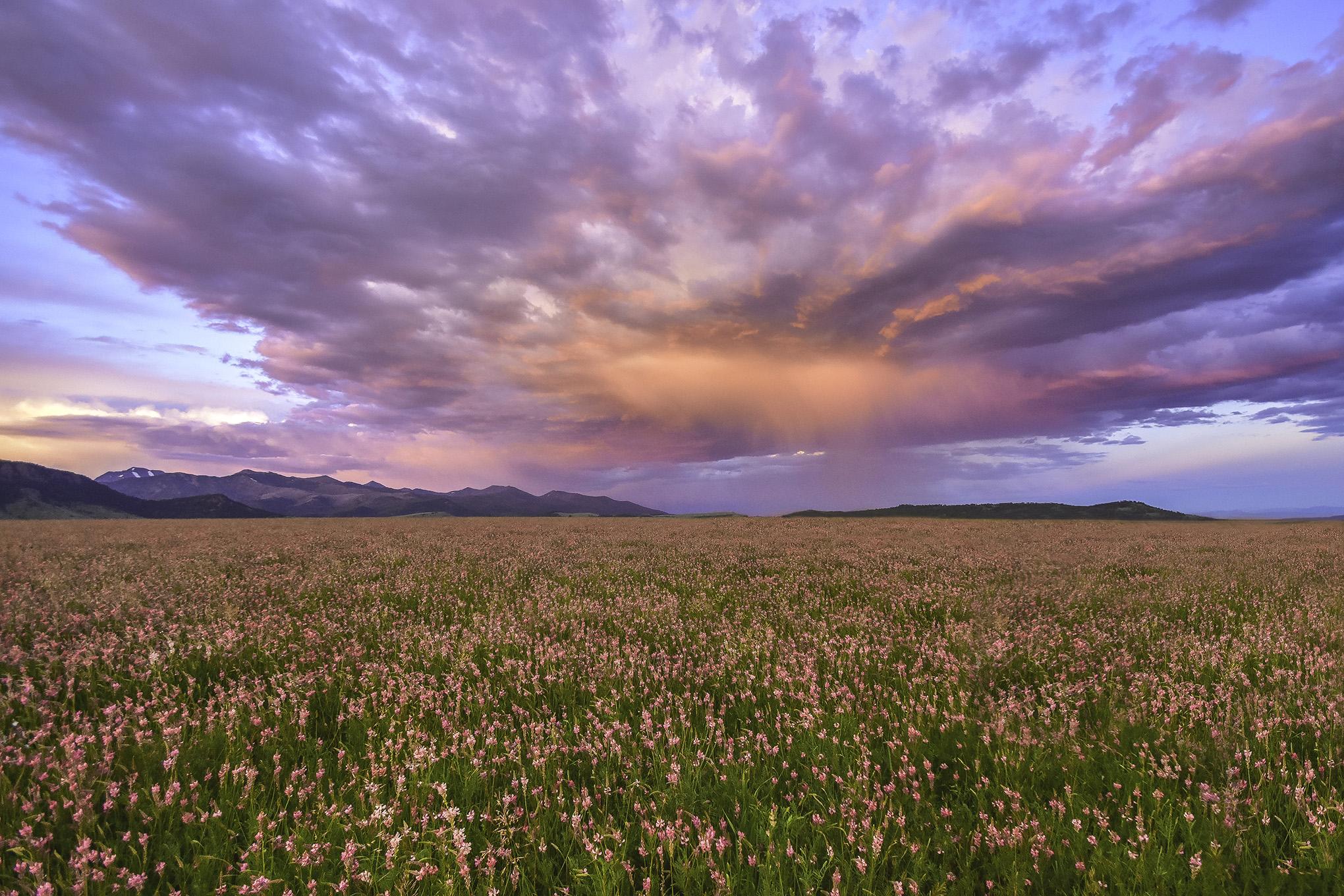 Montana In Pink / Jeremiah Cunningham.