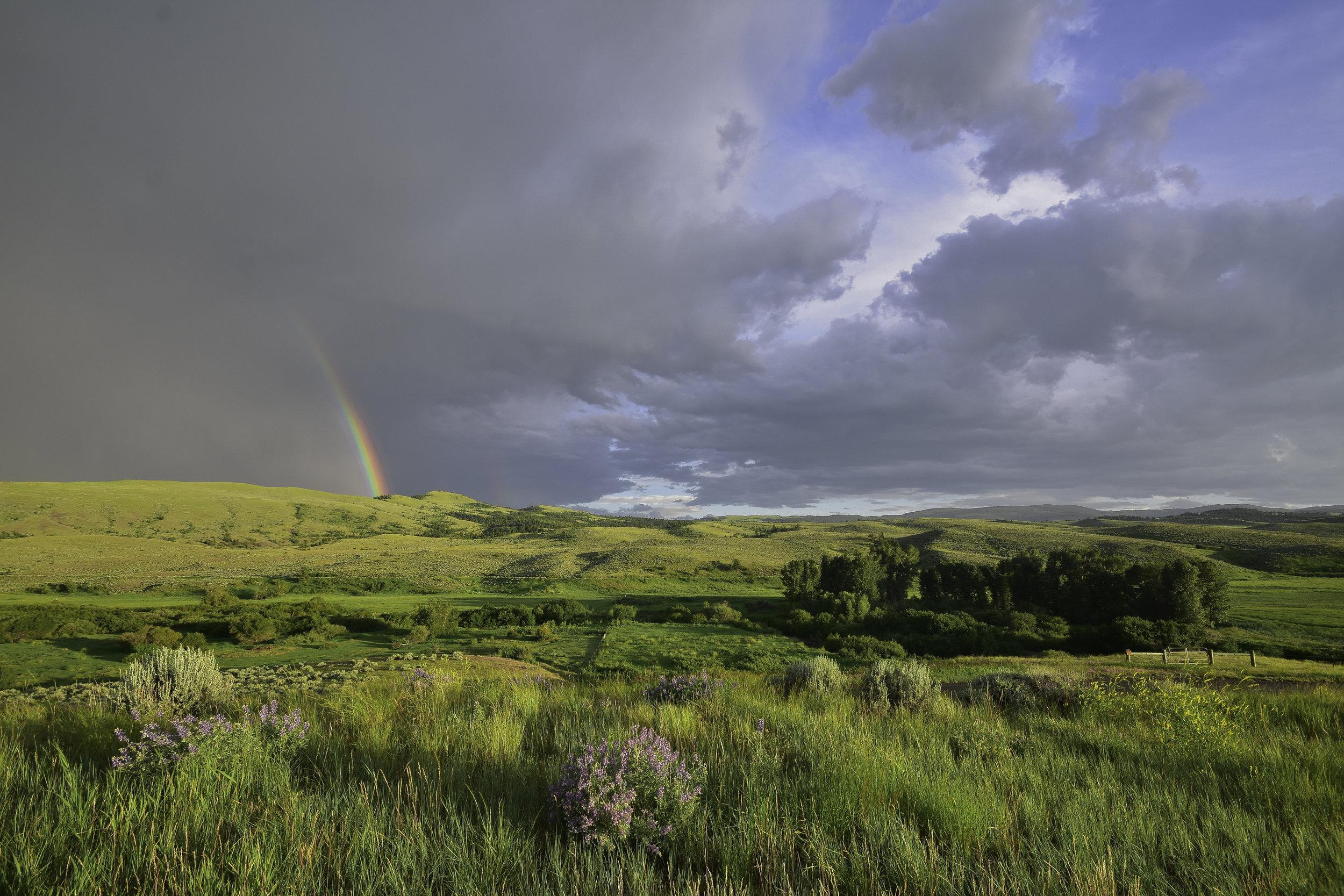 Chasing Rainbows / Jeremiah Cunningham.
