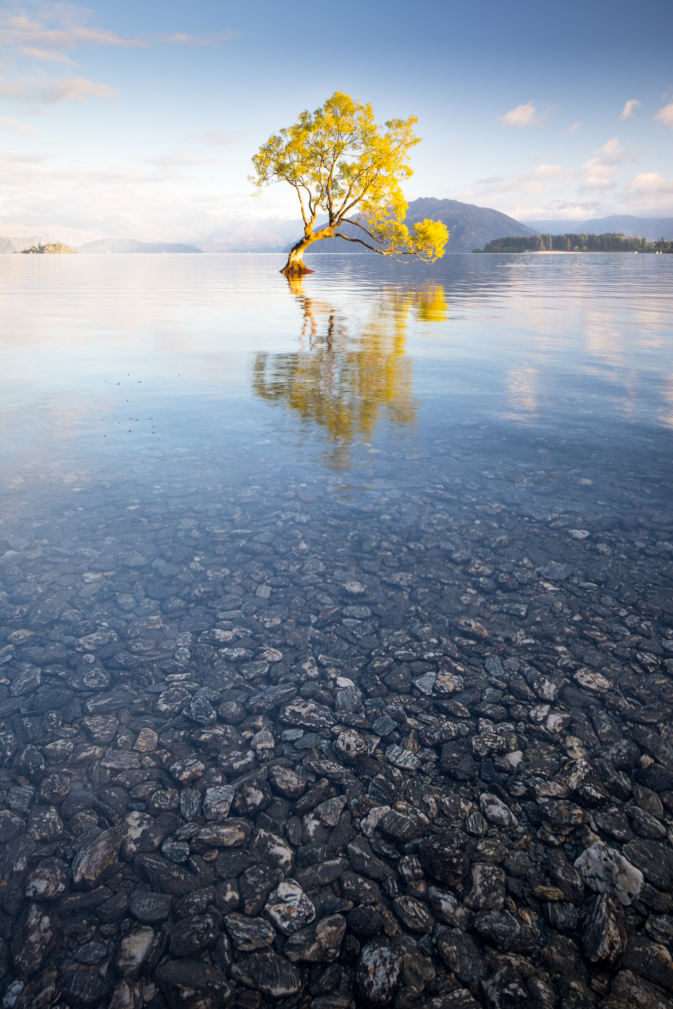 Wanaka Tree Morning / Ernesto Ruiz / Once most photographers were gone, I had freedom to move around without fear of disrupting others