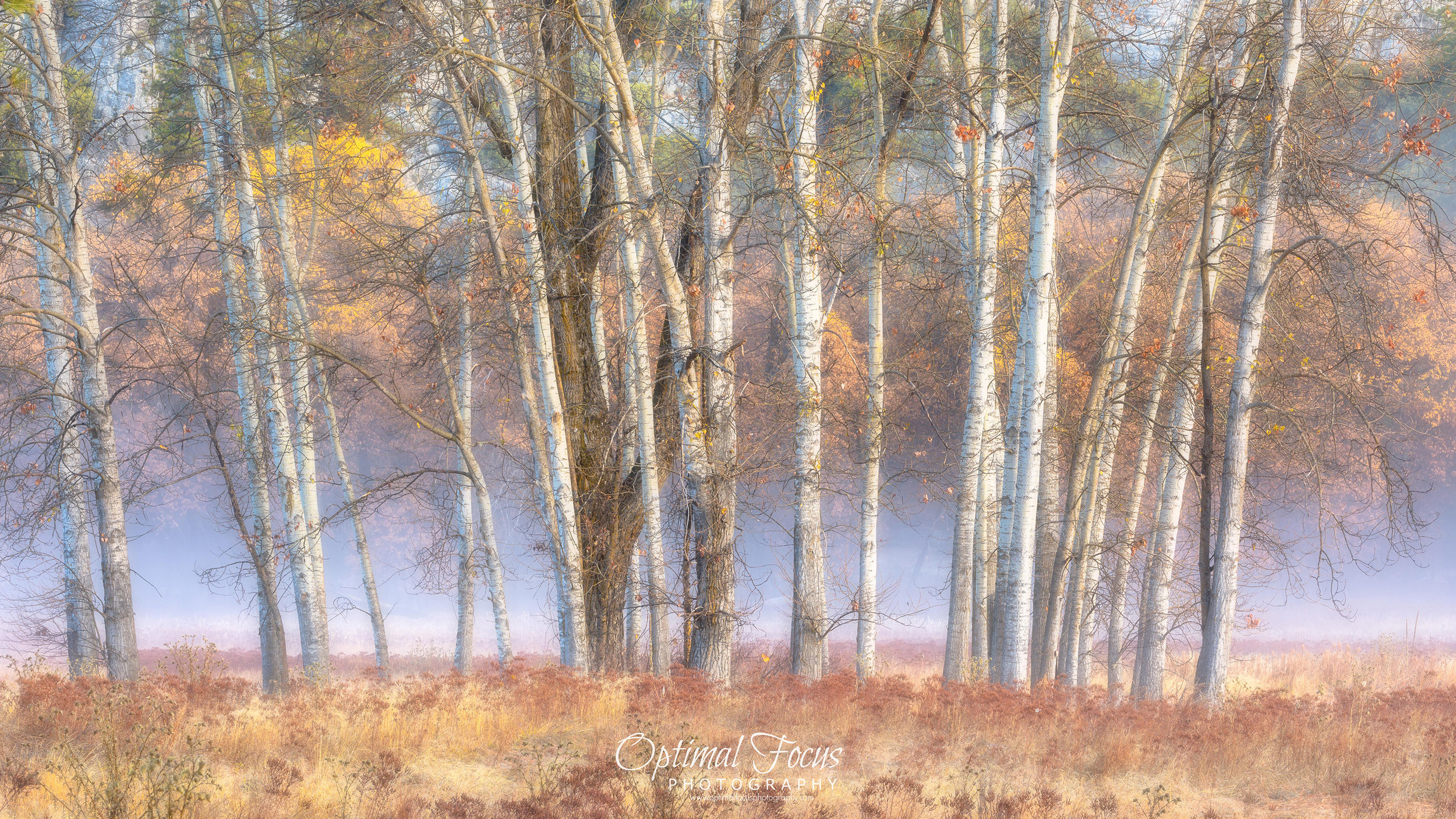 Trees in Mist / Beth Young