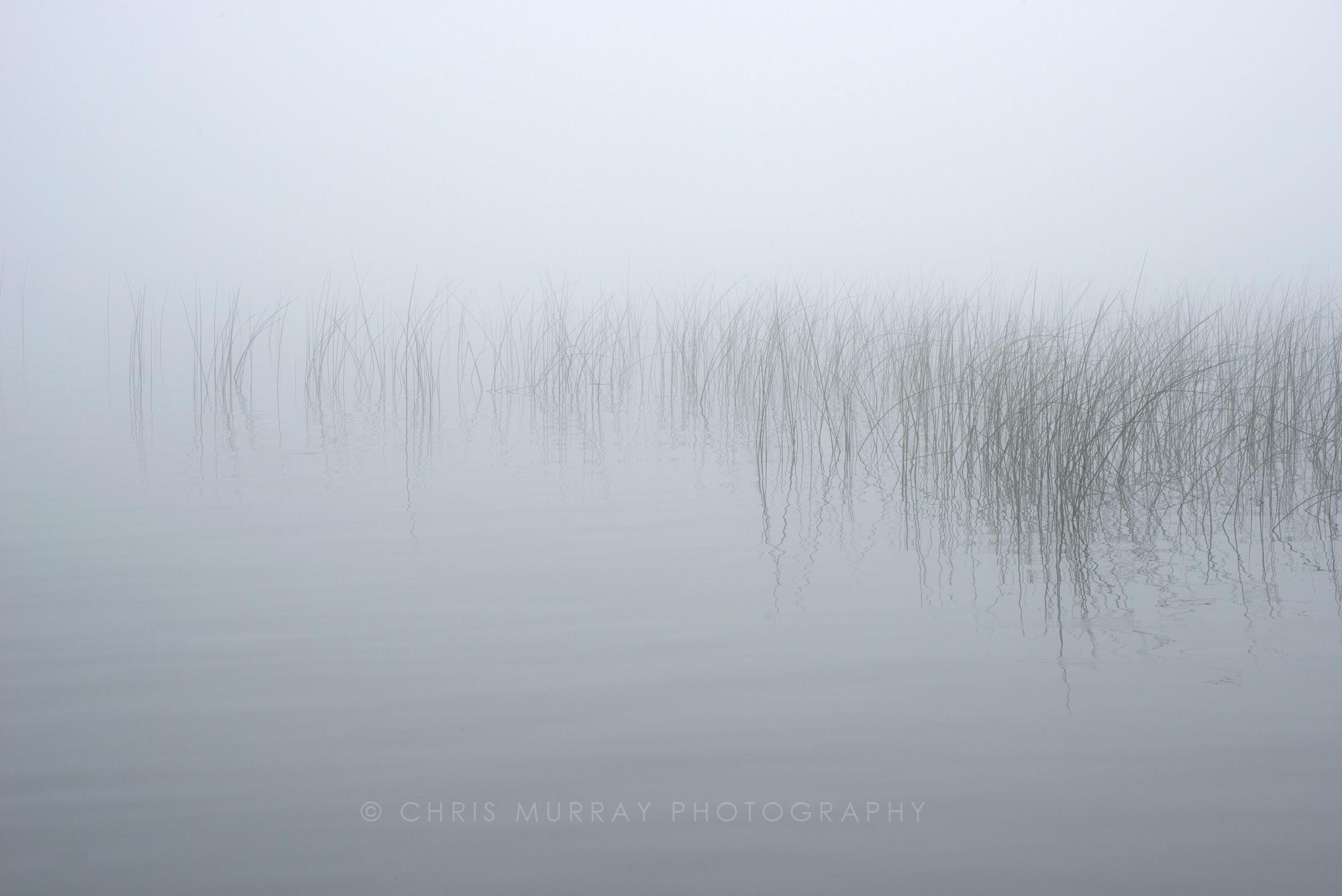Reeds / Chris Murray