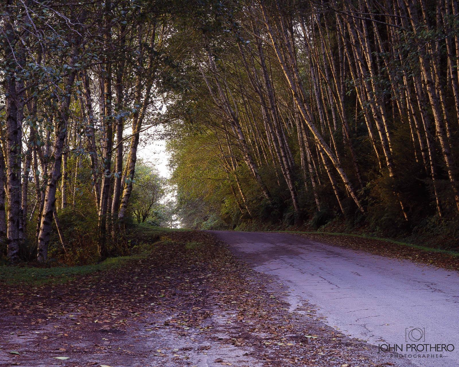"Coastal Drive, Prairie Creek Redwoods State Park / John Prothero / Zone VI 4x5"" view camera"