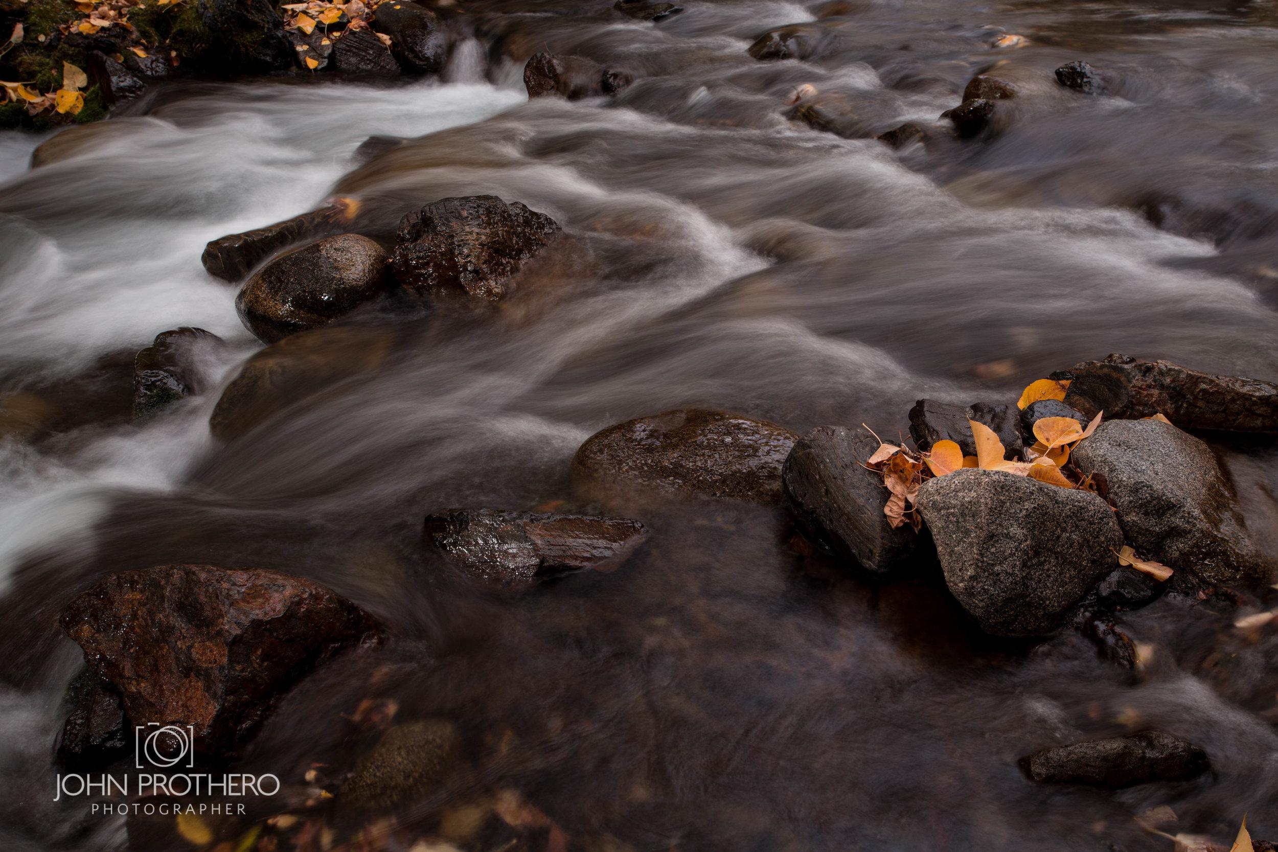 Aspen Leaves / John Prothero / Canon EOS 6D