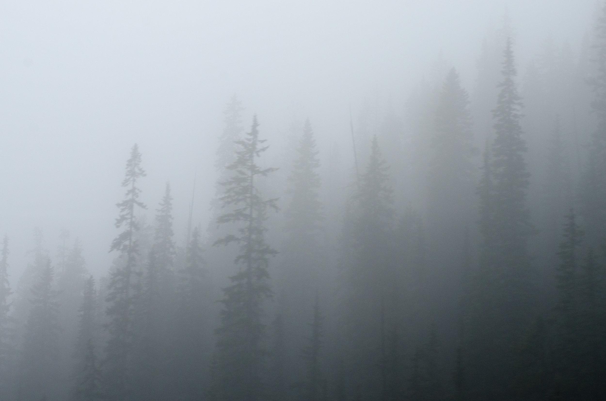 Ghost Pines _  Jennifer Henriksen Photography.jpg