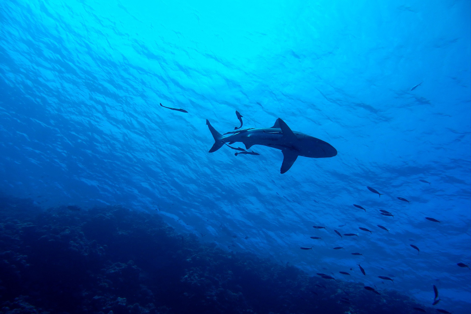 Sharks R Cool - Don't you think?