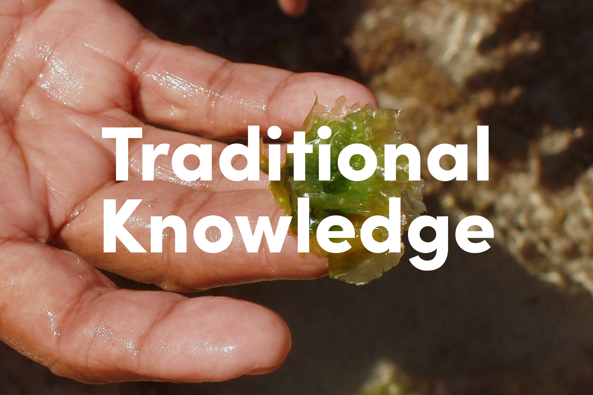 traditional-knowledge.jpg