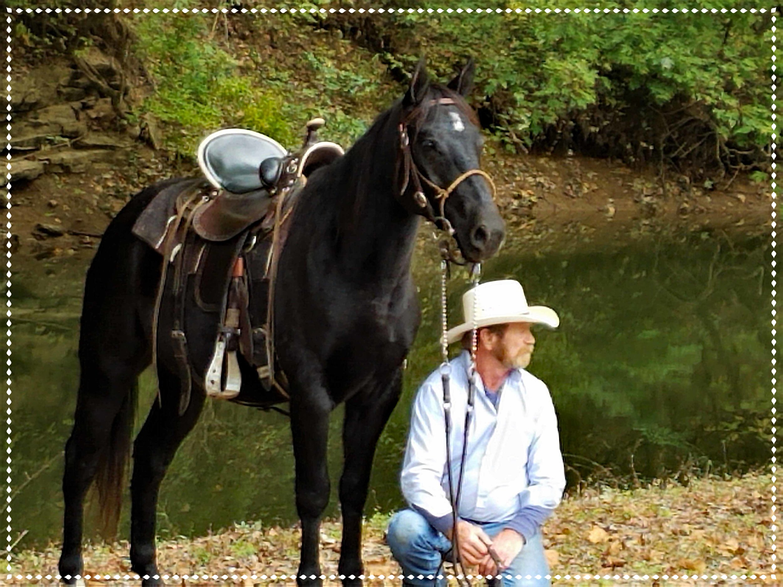 Magic Onyx, 2015 AQHA Gelding - This black beauty has the stocky Foundation build. He adores people and loves attention. Under saddle, great on trails. He has a curious personality, have not found anything that scares this guy. He wants to be a star. Enrolled in my Ultimate Trail Horse Finishing Program.
