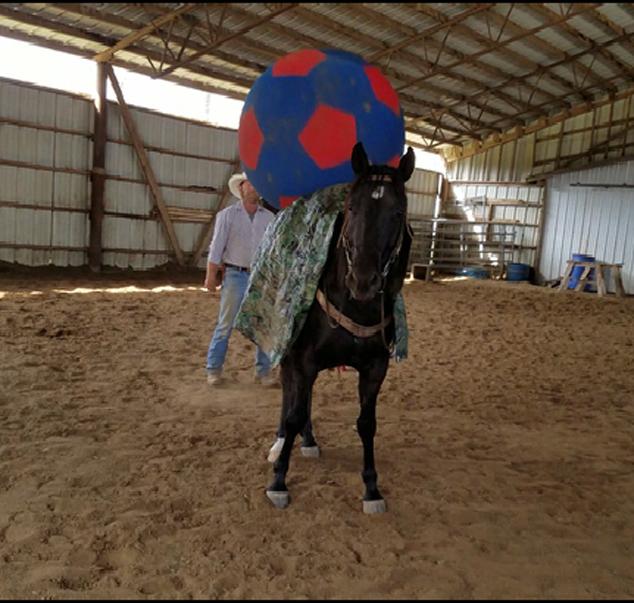Mo and the ball.Movie_Snapshot.jpg