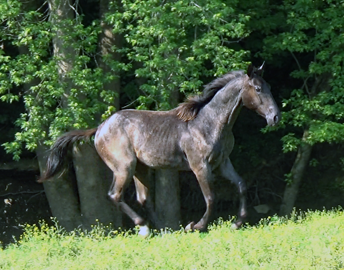Blue roan colt (9).Movie_SnapshotA.jpg