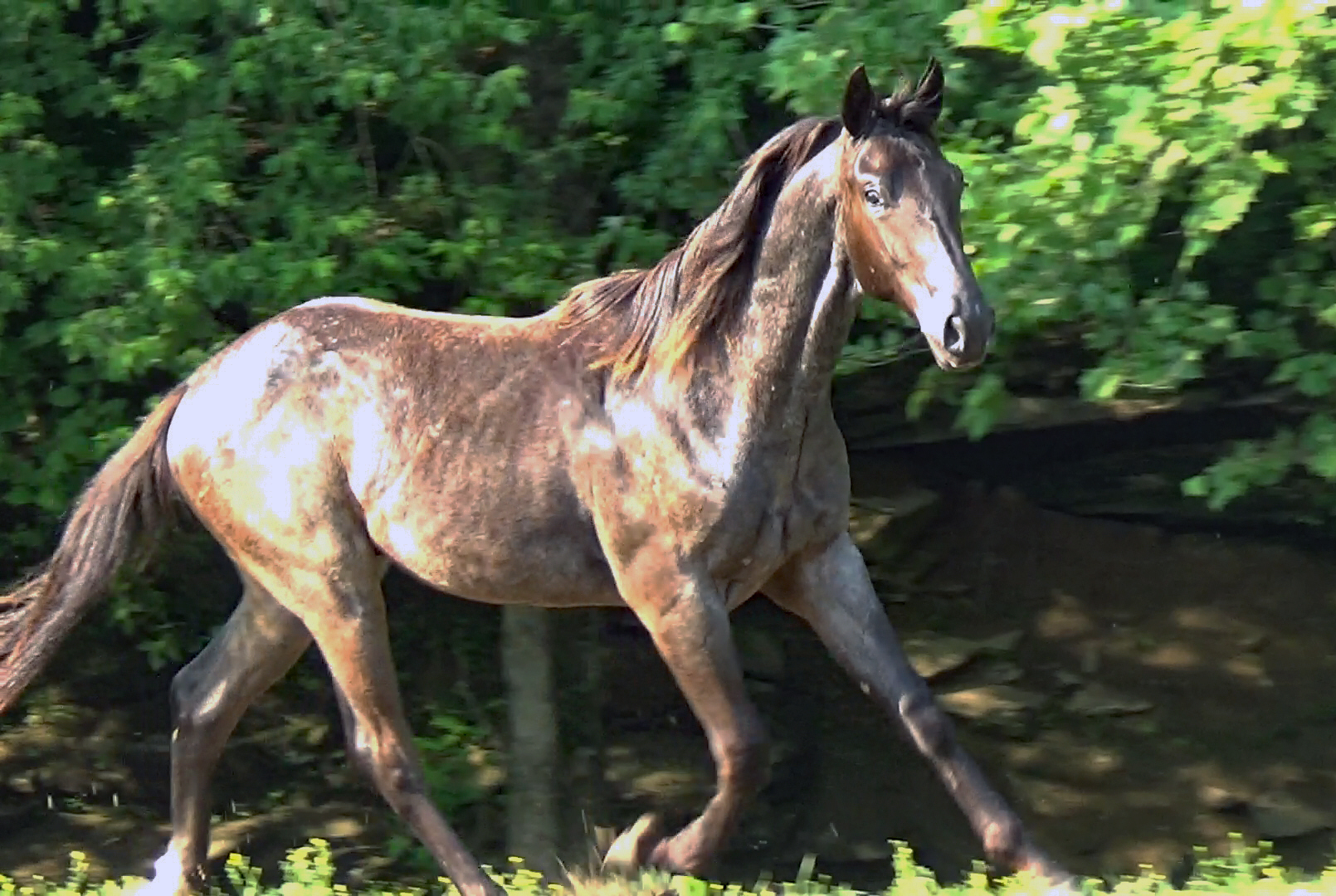 Blue roan colt (25).Movie_SnapshotA.jpg