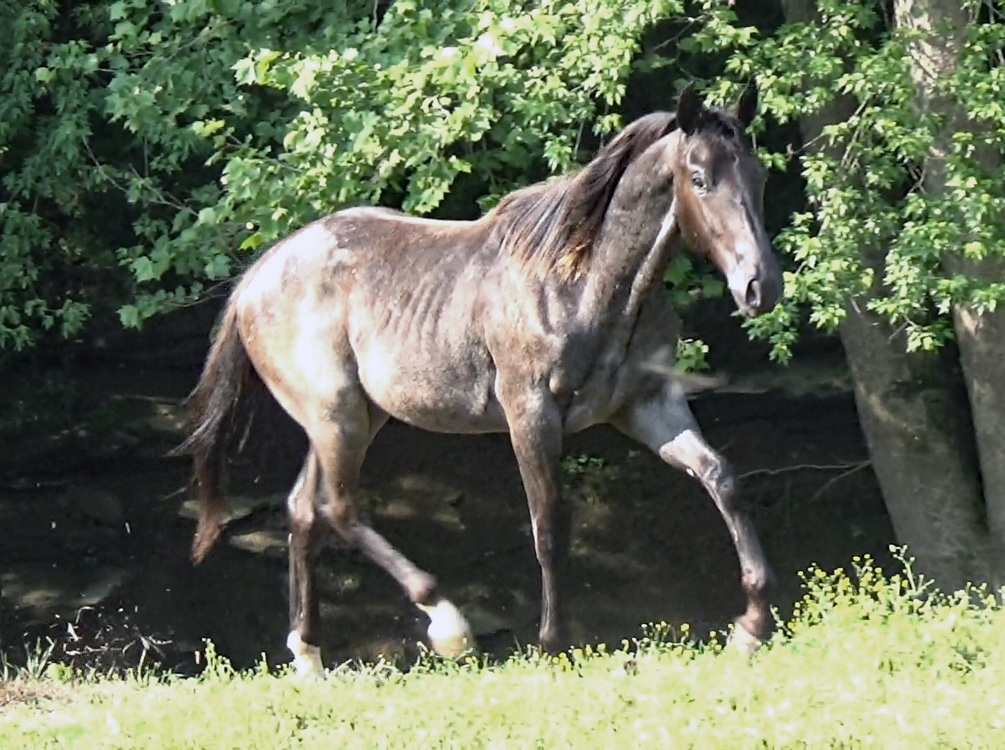 Blue roan colt (28).Movie_SnapshotA.jpg