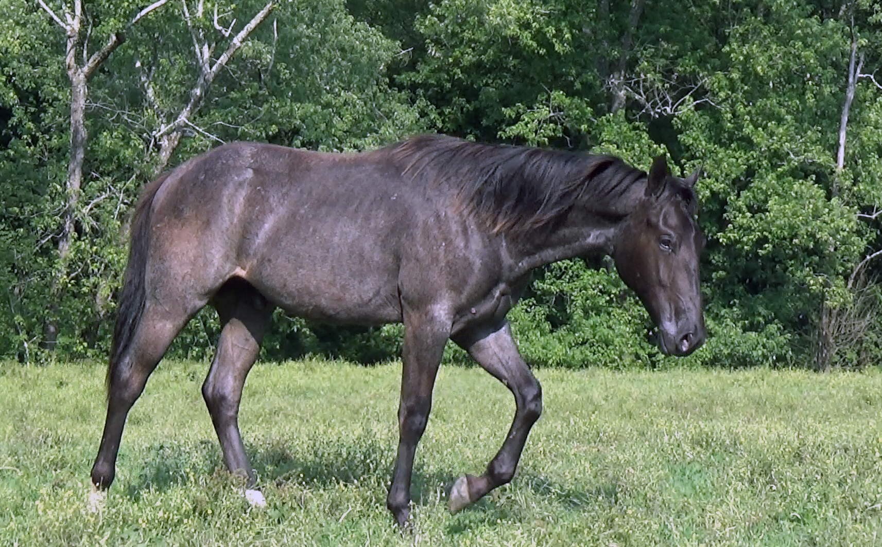 Blue roan colt (56).Movie_SnapshotA.jpg