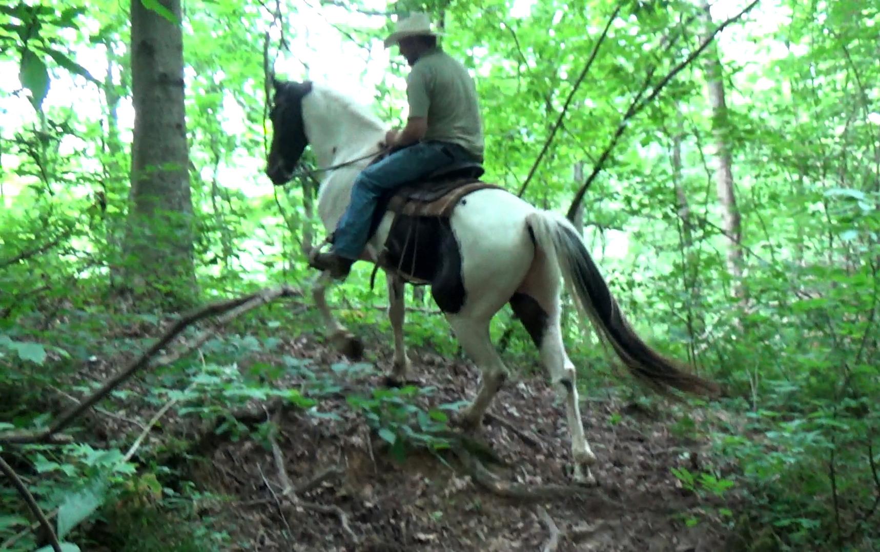 Alvin on trails (3).Movie_SnapshotA.jpg