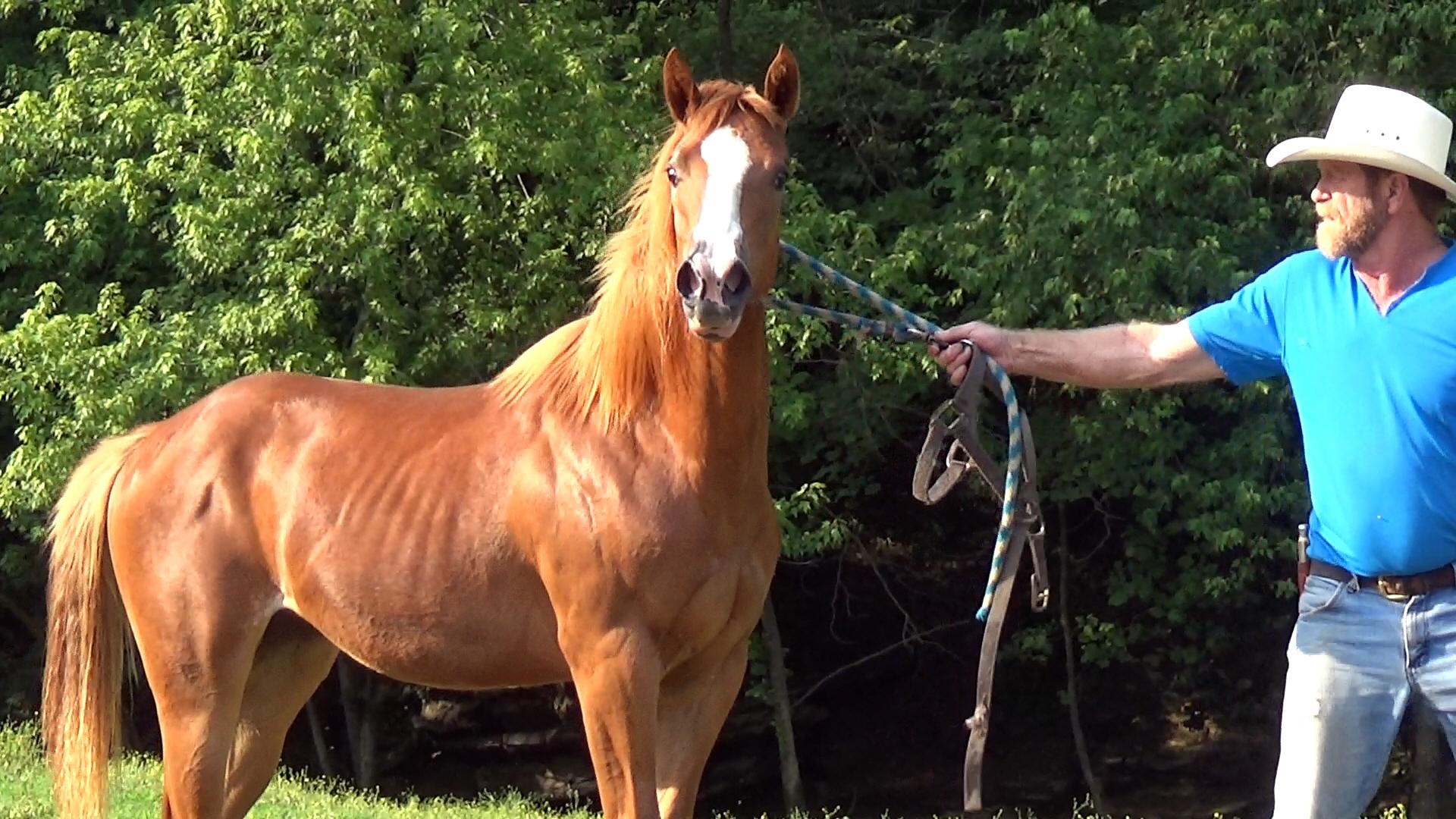 Sorrel filly (43).Movie_SnapshotA.jpg