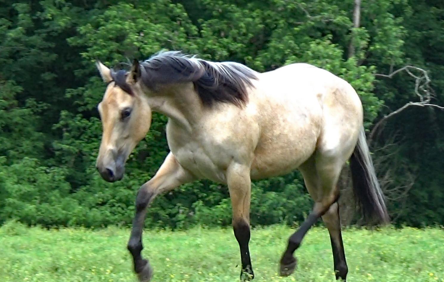 Buckskin filly (34).Movie_SnapshotA.jpg