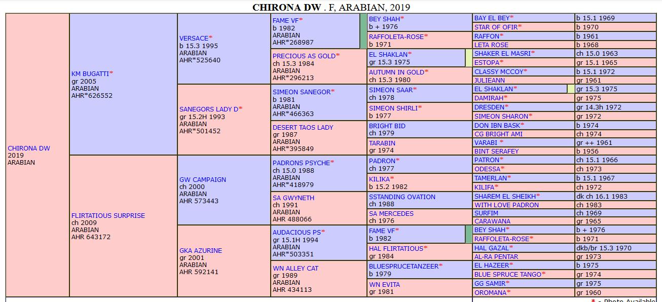 Chirona pedigree.png
