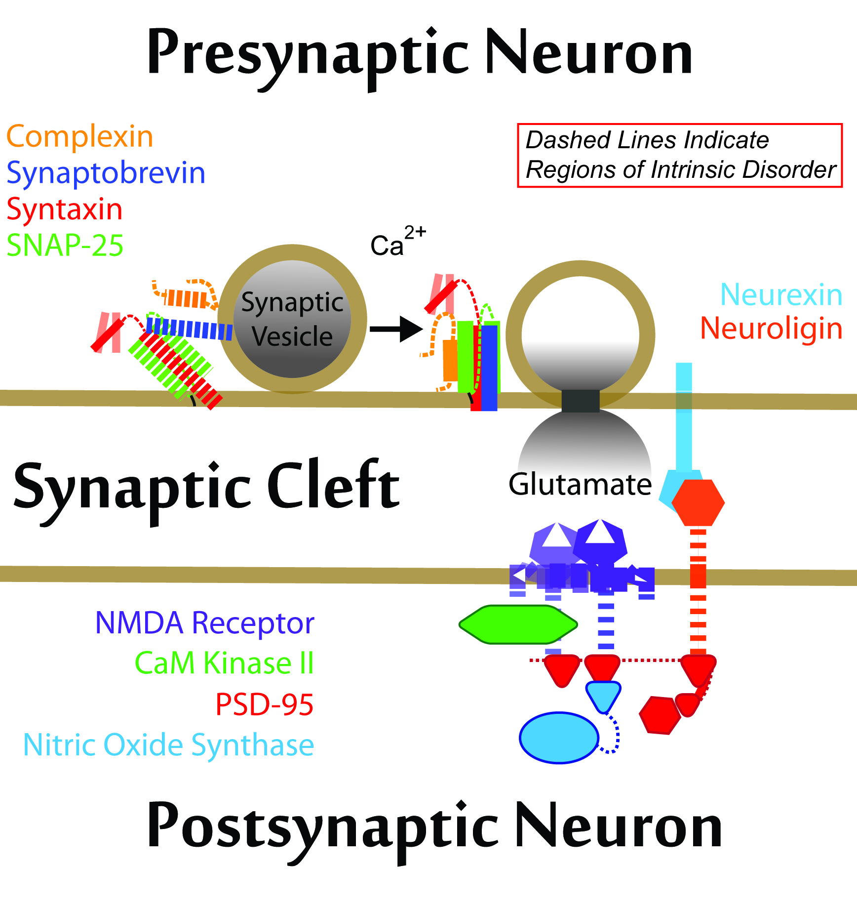 Scaffolds and the Physical Organization of the Synapse
