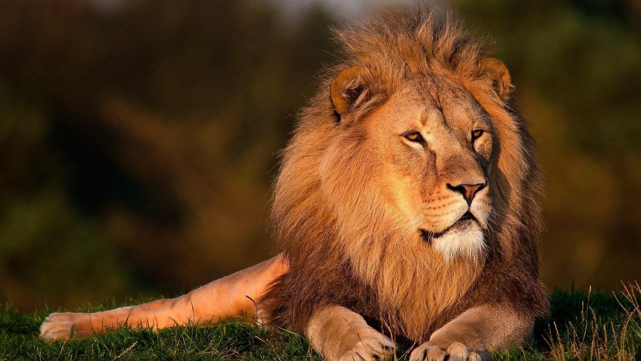 lion-794962_1280.jpg